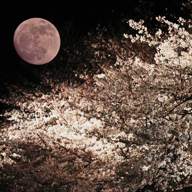 皆既月食と夜桜(こちらの写真は合成イメージです)