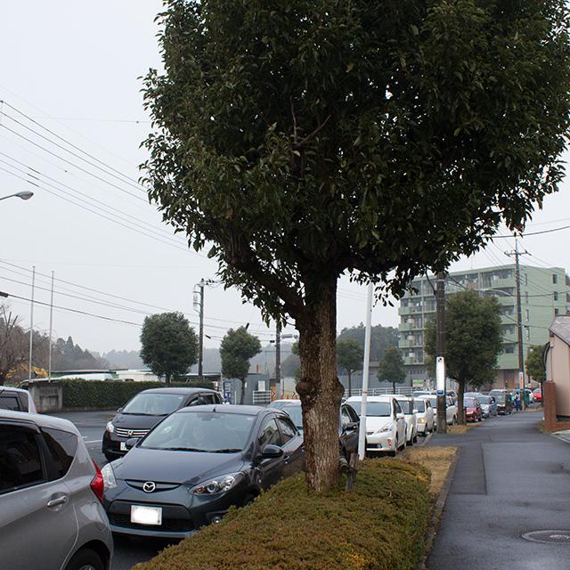 噂のクレマン渋滞
