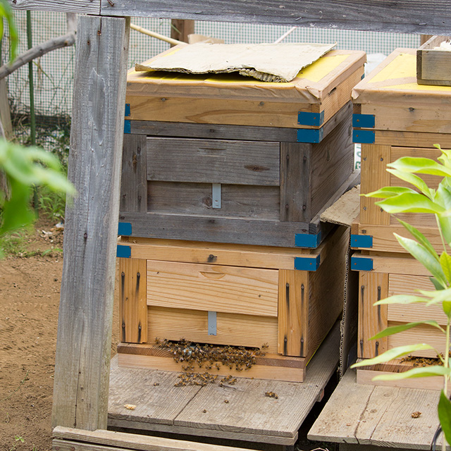 bees1817-2L