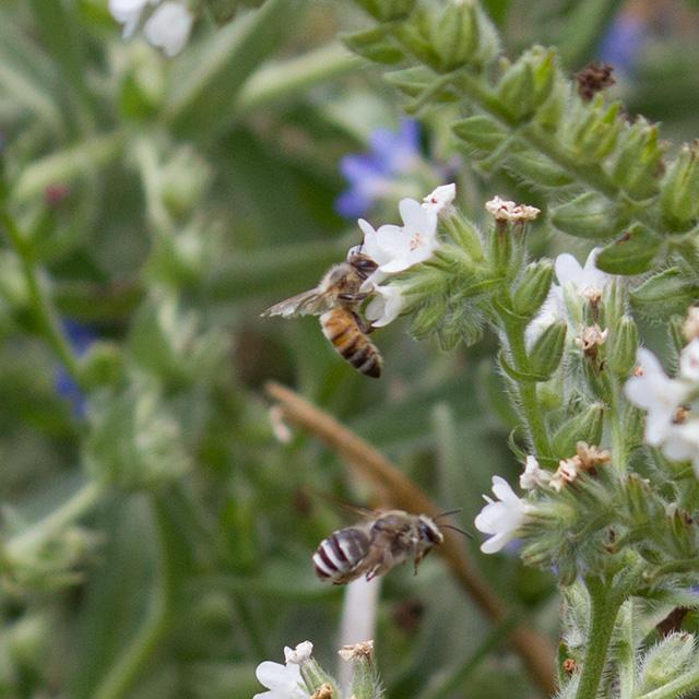 蜂さん達の蜜集め